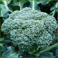 Sok z brokułu - właściwości